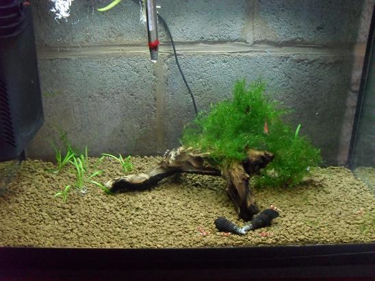 ma shrimproom et fishroom Sdc12056-1d0f42b