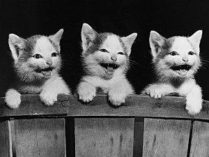 image-chatons-rieurs-fanfan