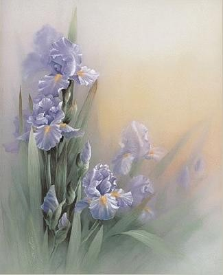 beau-fond-d-ecran-fleur-flora