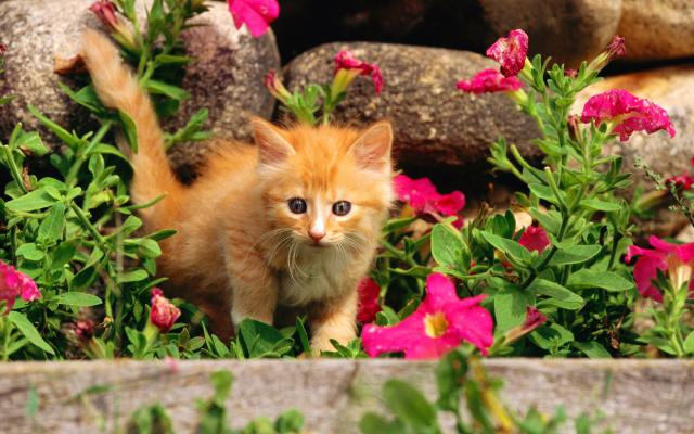 http://img48.xooimage.com/files/7/b/9/1920cats_4010-61bc3d.jpg
