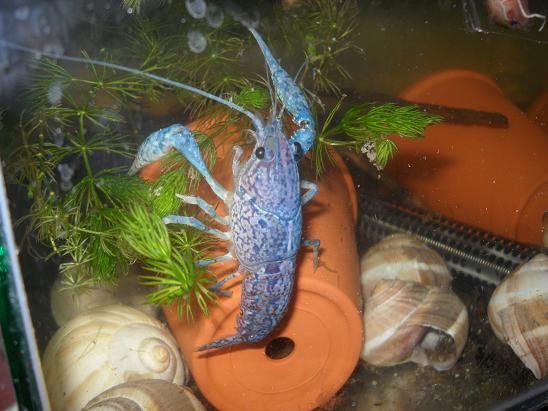 ma shrimproom et fishroom Sdc12128-1d75d60