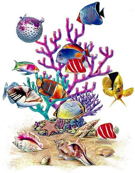 poissons-coquillages-corail-beau-fond-d-ecran-flora