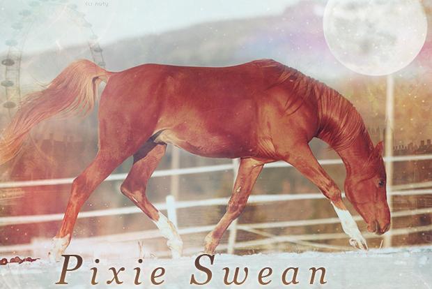 (c)  nuty. Pixie-swean-12dd71d