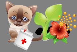 Des plantes dangereuses pour les chats et chiens - Plantes toxiques non toxiques chien chat ...