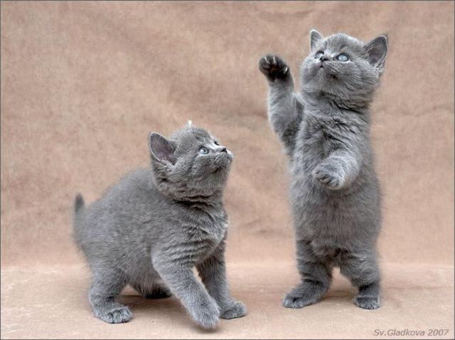 Deux beaux petits chatons joueurs !