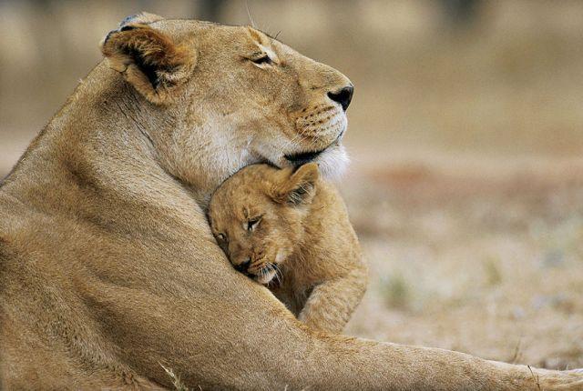 L'Amour existe dans le coeur de toutes les espèces vivantes
